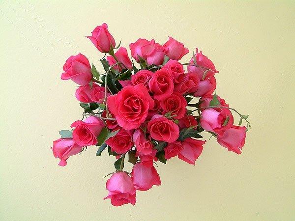 Roses-for-Love