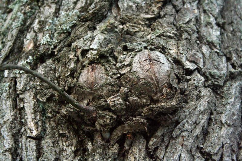 Bark-Bark