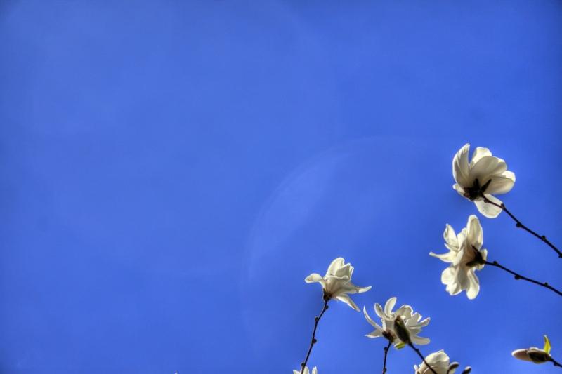 Blossom-Blue-Sky