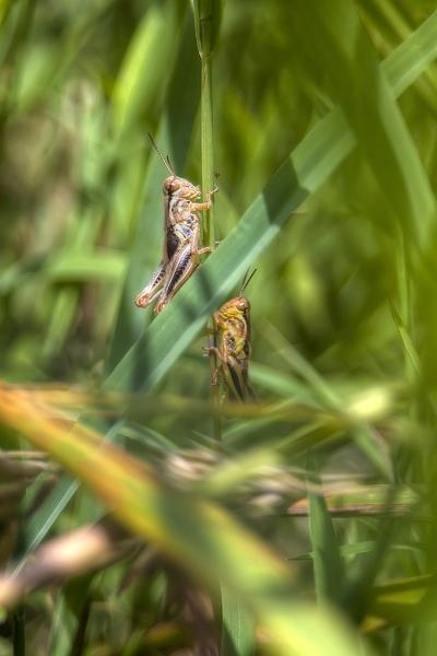 Ahhh-Grasshoppers