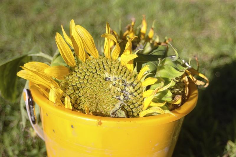 Sun-Bucket