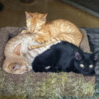 The-Kitten-Club