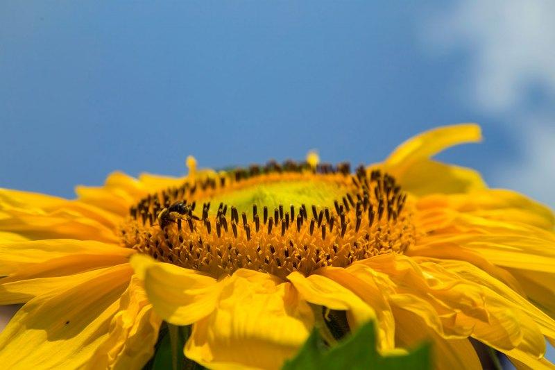 Sunny-Side-Up