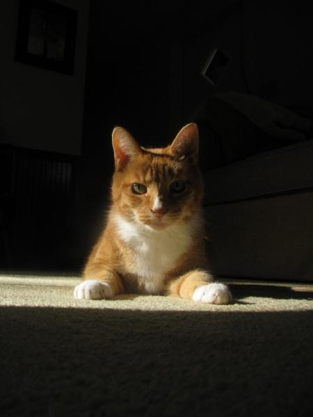 Wrangler-the-Cat