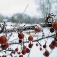 Berry Cracked Ice