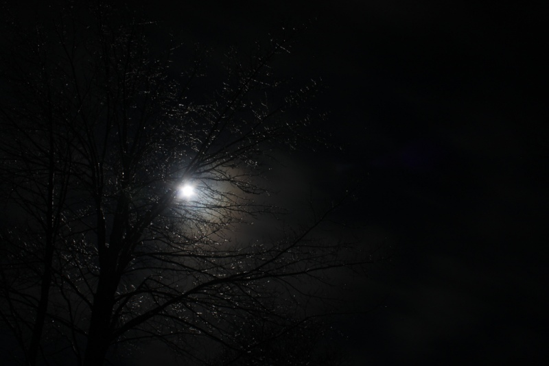 Full-Moon-Sparkle-Tree