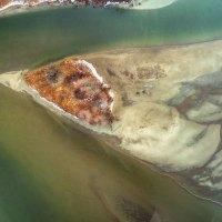BirdFishSharkFace Island