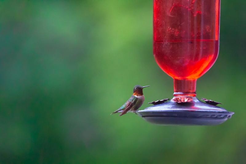 Teeny-Tiny-Bird