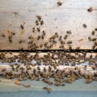 Bee Hive Yourself