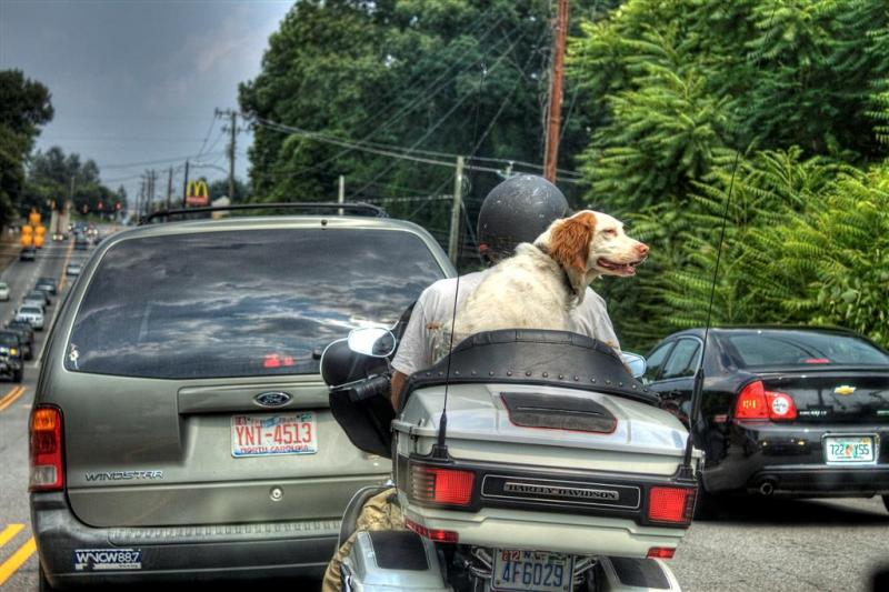 Dog-on-a-Bike