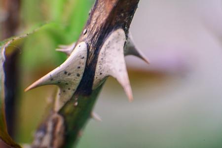 Spiky Stick