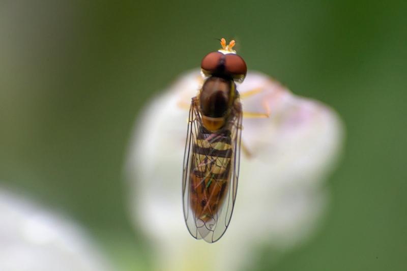 Fly-Guy