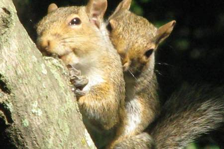 Burying-Nuts