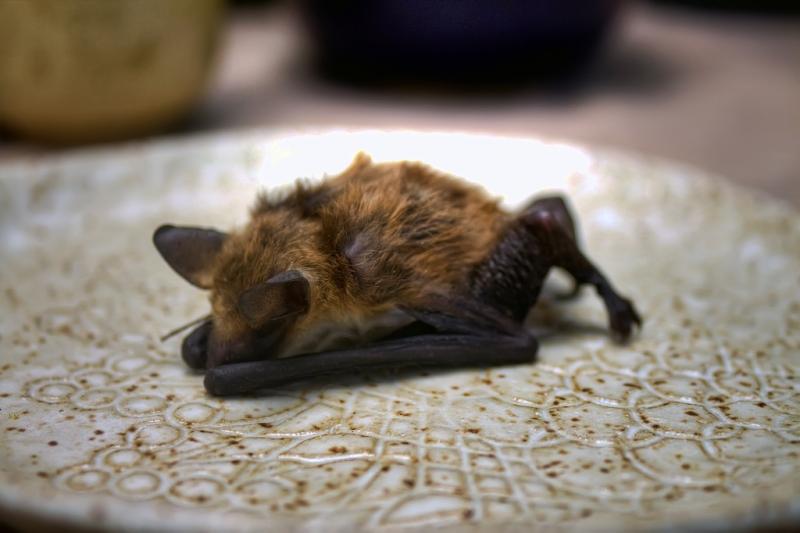 Bat-Yoga