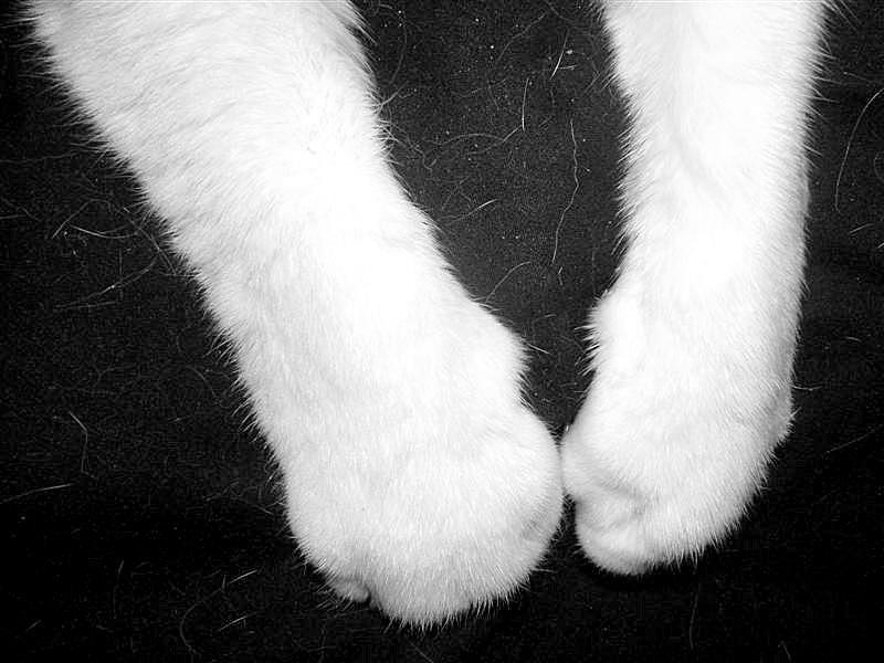 Cat-Legs