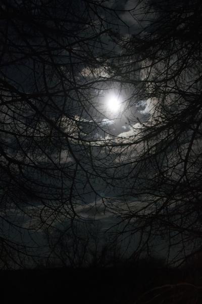 Moon-Nest