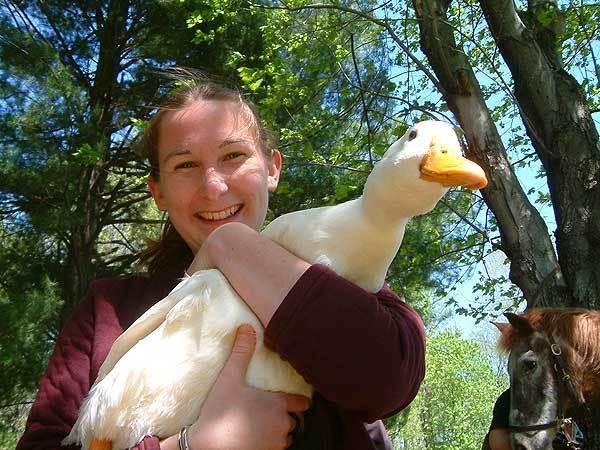 Duck-Love