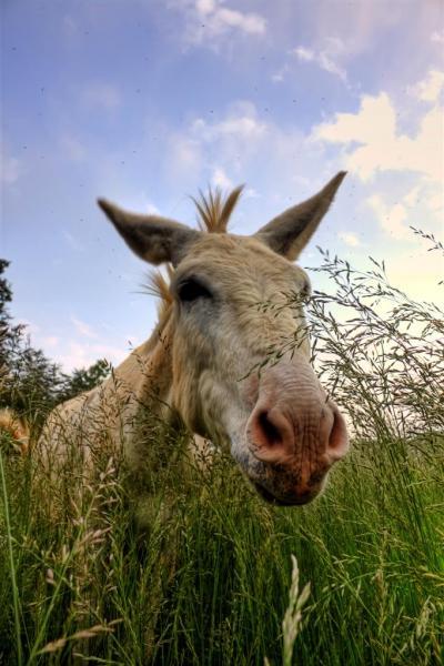 Field-Donkey