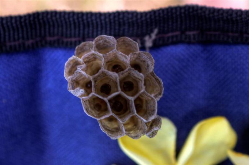 Tiny-Hive