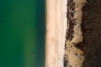 Beachy Seaweed