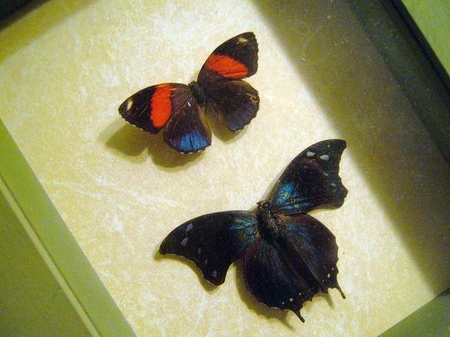 Flutter-Bye