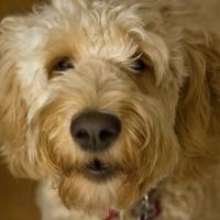 Ellie-Dog