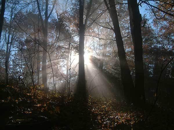 Morning-Glory