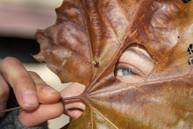 Leaf-Peeping