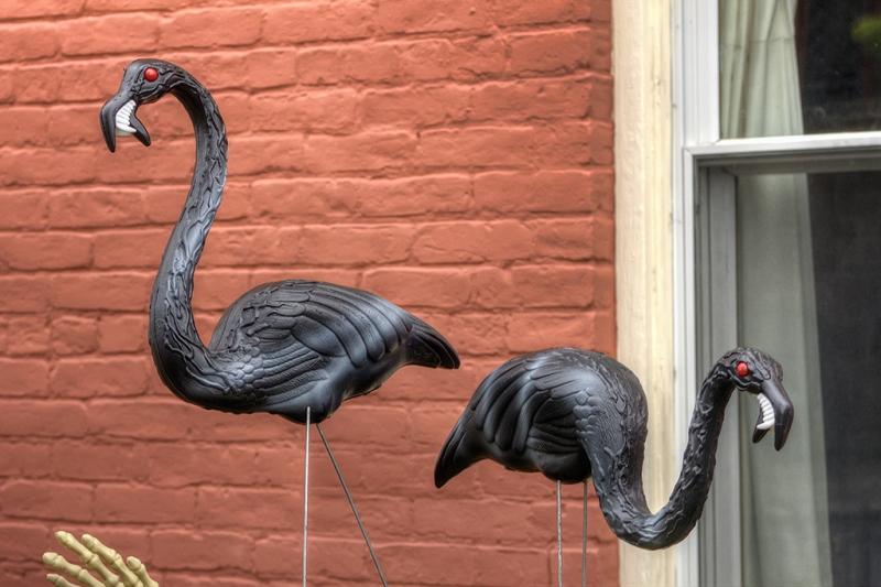 Flocking-Together