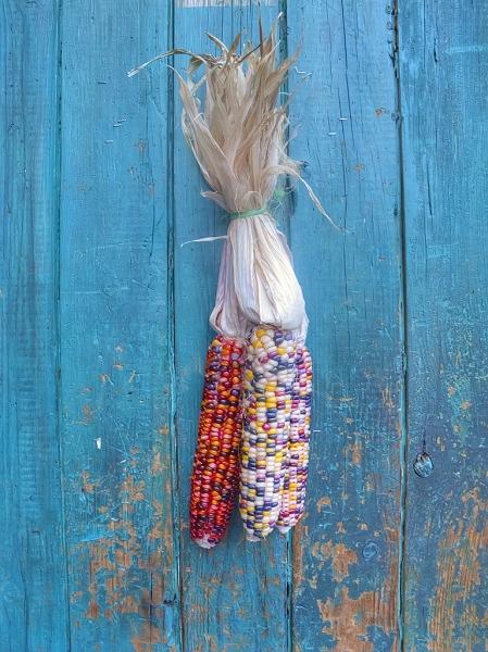 Corn-Door
