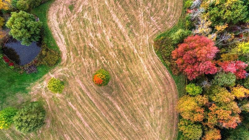 Fall-Field
