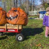 2020 Pumpkin Lookalike Contest