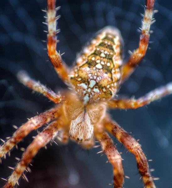 Incy-Wincy-Spider