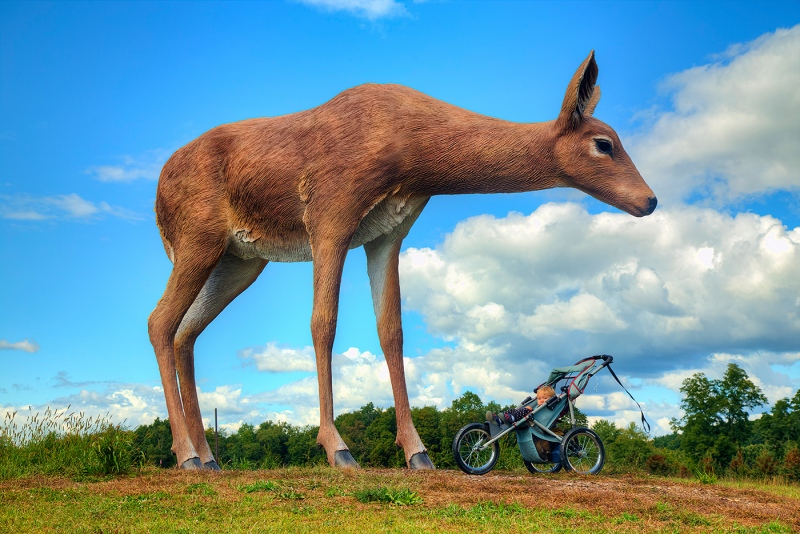 Deer-For-Scale